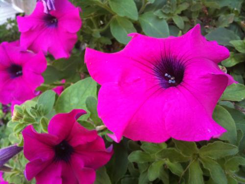 花の名前を色やテイストから検索!みんなの花図鑑「みん花」