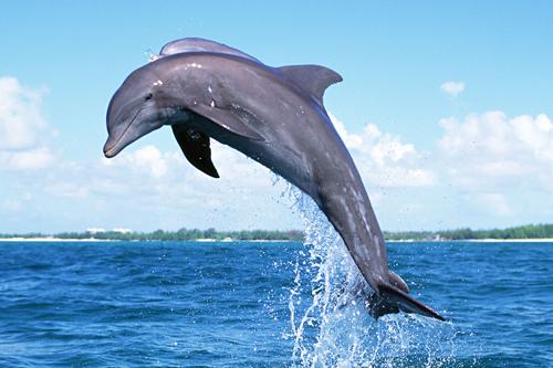実はイルカはクジラだった!? 曖昧になりがちなアレとソレの違い4選