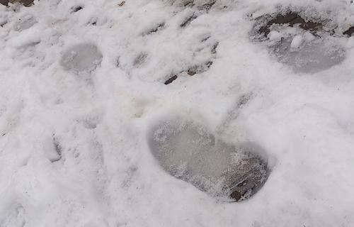 北国の人に学ぶ、雪道を転ばずに歩くコツ