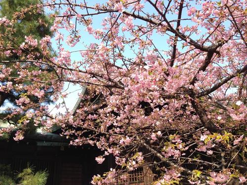 デジカメやスマホで桜の花をきれいに撮影するコツ