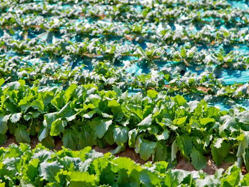 タダで野菜がもらえるかも!? 農家直販サイト「タダヤサイドットコム」とは?