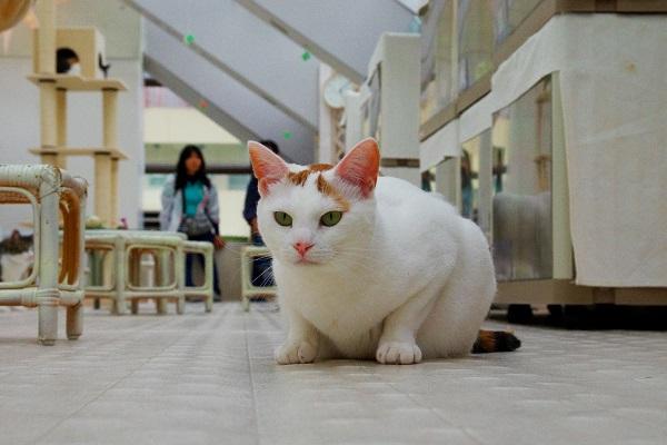 話題の「猫付きマンション」ってなに? 今すぐ入居したいあなた!気になるポイントを聞いてみた