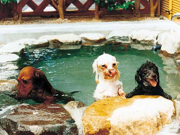 愛しのペットも温泉に入ることができる宿と施設7選