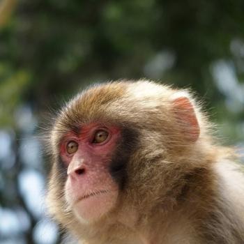 2016年は「申(さる)年」。話のネタに使える猿に関する雑学6選