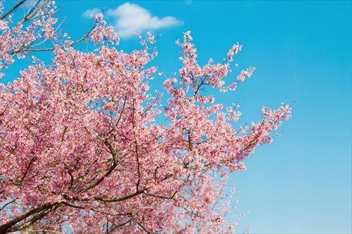 お花見に役立つアプリ!スポット探し、日程調整、当日のデリバリーもできるよ!