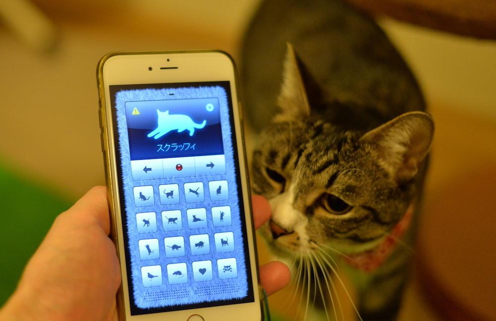 人間の言葉を猫語に翻訳するアプリを、飼い猫で試してみた!