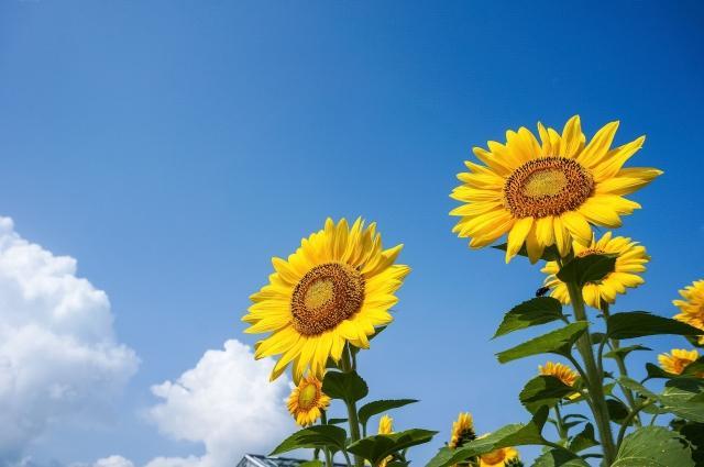「8月」の雑学を知って暑い季節を乗り越えよう!