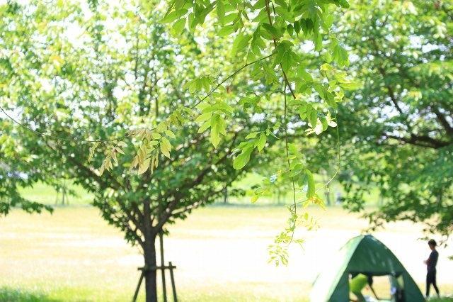 夏の外遊びに必須!おすすめサンシェードの特徴と選び方