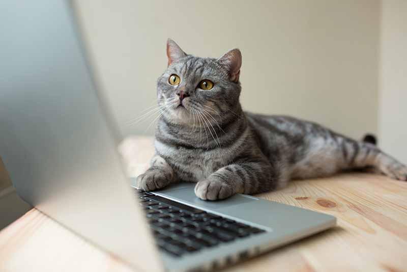 在宅ワークのお供にも!動画を流すだけの「見る保護猫支援」とは?